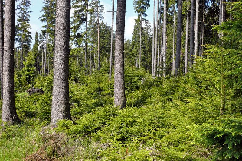 Charakteristika lesního závodu Kladská